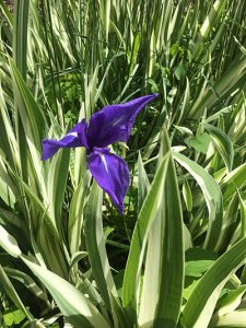Lonely flower from Gene Nimocks